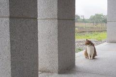 Domestic tabby cat Stock Photography
