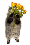 Domestic tabby, fluffy,siberian cat with flowers Stock Photos