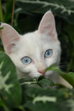 Domestic white cat in the garden Royalty Free Stock Photography