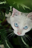 Domestic white cat in the garden Stock Photos