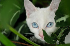 Domestic white cat in the garden Royalty Free Stock Images