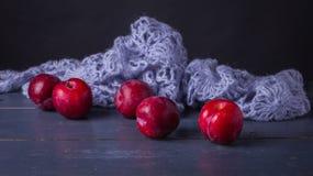Domestica del Prunus con lanas azules hechas punto Imagenes de archivo