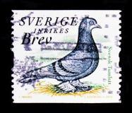 Domestica svedese di forma di colomba livia della chiavetta, serie di fauna, circa 2004 Immagine Stock