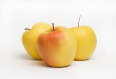 Domestica van Malus van de appel Stock Foto