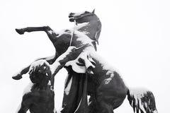 Domesticar dos cavalos Fotos de Stock Royalty Free