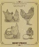 Domesticated birds Vector set. Hen, Cock, Chicken. Chicken farm hand drawn illustration. Vector Royalty Free Stock Photos