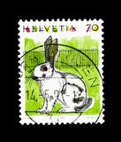 Domesticus cuniculus Oryctolagus εσωτερικών κουνελιών, ζώα serie, circa 1991 Στοκ Εικόνες