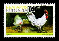 Domesticus del gallus del Gallus del pollo della Livorno, serie, circa 2002 Immagine Stock