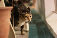 Domestizierte Katze Stockbild