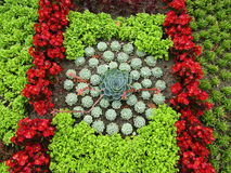 Domfront Succulent Plant. Plants soil red green brown pretty Succulent Plant Royalty Free Stock Photography