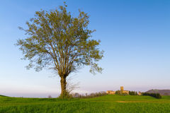 The dominance of the big tree Stock Photo