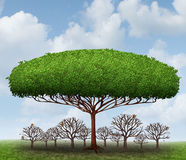 Dominating The Market. Business concept as a symbol of taking over a sector by absorbing investment and growth potential with a metaphor of a big tree blocking Royalty Free Stock Images