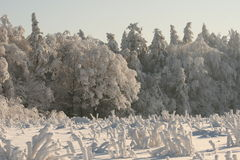 Domination of the winter. Snow cover the village, frozen field and forest Royalty Free Stock Photos