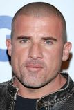 Dominic Purcell Stock Photo