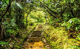 Dominica Boiling Lake Hike Tropical Staircase. Island of dominica boiling lake hike tropical staircase, pathway with trees,stones and greenery Royalty Free Stock Photography