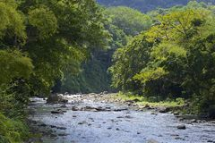 Dominica, Caribbean. Lush rainforest and a river of Dominica, Caribbean stock photo