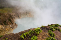 Dominica Explorations Stock Photography