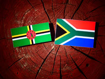 Dominica flag with South African flag on a tree stump isolated Stock Photos