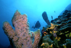 Dominica Reef Stock Photo