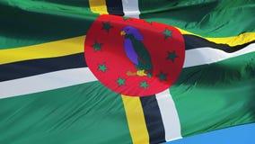 Dominica vlag in langzame motie voorzag foutloos met alpha- van een lus stock footage