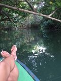 Dominica wody kwiat zdjęcie stock