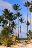 Dominicaans zandig strand stock afbeeldingen