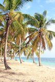 Dominican beach. Dominican. Beautiful beach in Punta Cana Stock Photography