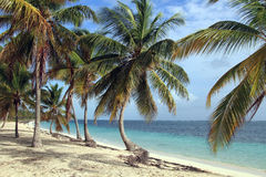 Dominican beach. Dominican. Beautiful beach in Punta Cana Stock Photos