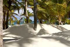 Dominican beach. Sand and palms Royalty Free Stock Photography