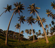 Dominican coast - palms Royalty Free Stock Images