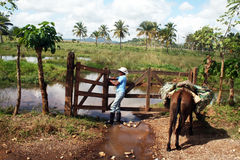 Dominican ranch Stock Image