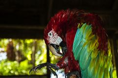 Parrot at the Wild Life Zoo on the Island Of Dominican Republic stock images