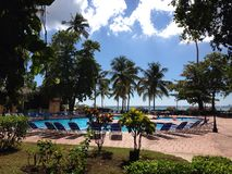 Dominican Republic palm three  green  hotel  trip hotel vegetation flora Don Juan Boca Chica     swimming pool. Vegetation green flora Stock Photography