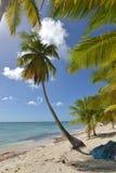 Dominican Republic, Saona Island Stock Photos
