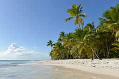 Dominican Republic, Saona Island Stock Image