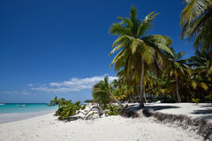 Dominican Republic, Saona Island Stock Images