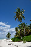 Dominican Republic, Saona Island Royalty Free Stock Image