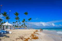 The Dominican Republic. Sandy beach and sargas. The Dominican Republic. Sargas algae thrown on the beach. Sun beds and vacationers Royalty Free Stock Photo
