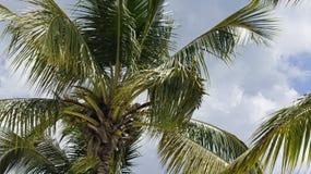 Dominikanisch stockfoto