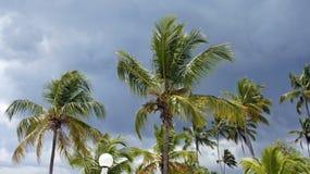Dominikanisch stockfotos