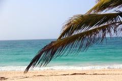 Dominikanische Republik. Palme Stockfotografie