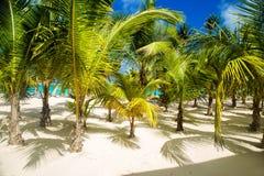 Dominikanische Republik, Punta-cana, Saona-Insel - Mano Juan Beach stockfotos