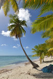 Dominikanska republiken Saona ö Arkivfoton