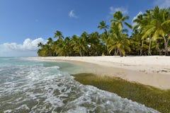 Dominikanska republiken Saona ö Royaltyfri Foto