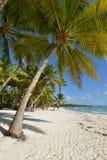 Dominikanska republiken Saona ö Arkivbilder
