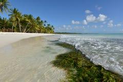Dominikanska republiken Saona ö Royaltyfri Bild