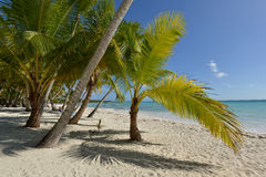 Dominikanska republiken Saona ö Royaltyfria Bilder