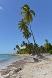 Dominikanska republiken Saona ö Fotografering för Bildbyråer