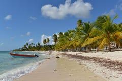 Dominikanska republiken Saona ö Royaltyfri Fotografi