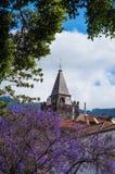 Domkyrka av vår dam av antagandet - Funchal, madeira Royaltyfri Bild